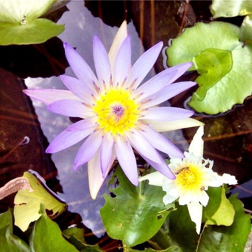 Good afternoon ..🙋🏻😘🐷👧🏼😊☺️🌷🌷🌾🌱🌾 Hello World Relaxing Enjoying Life I Like You. Metoo Flower Collection Good Afternoon ❤✌ Flowerporn Flowers Lotus Flower