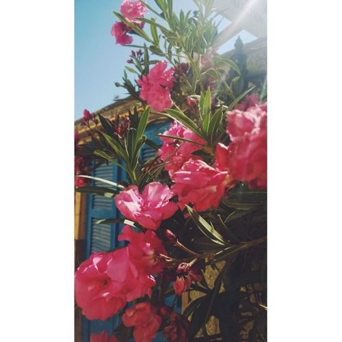 Omods Zypern Blumen Aidastella Aida Cruiseship Holidays Summer☀️🎧 Nature's Diversities