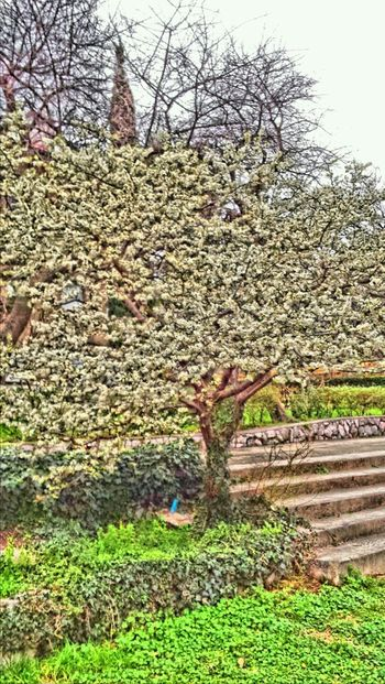 Hello World Tree Hdr_lovers Hdr_arts