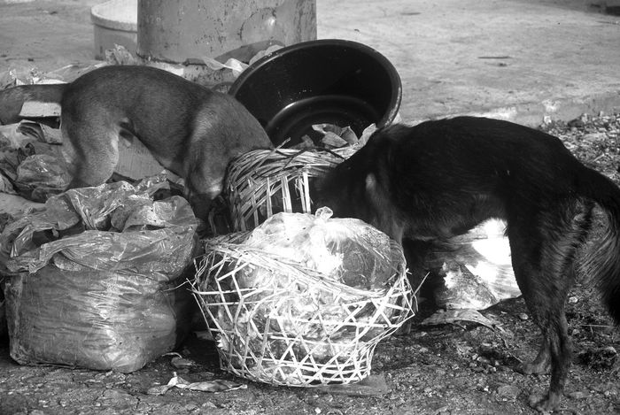 Two stray dogs in Thailand scavenging from roadside rubbish Abandoned Animal Bangkok Black And White Dog Eating Hungry Mixed Breed Mongrel Pet Recycling Refuse Rubbish Scavengers Scavenging Stray Stray Dog Street Dog Streetside Thailand Trash