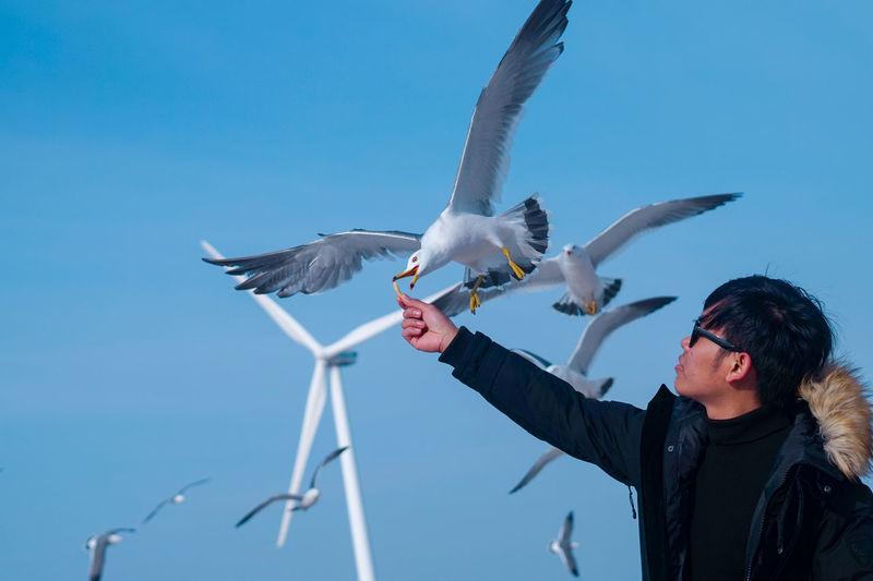 bird in debudo island Winter Clothing South Korea Debudo Island Seoul Travel Windmill Bird Flying Spread Wings Clear Sky Blue Sea Mid Adult Sky Sea Bird Falcon - Bird Flock Of Birds Bird Of Prey Seagull