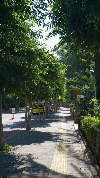 Alanya. Turkey. Alanya Turkey Tree Shadow Water Sunlight Empty Road Growing Road Marking