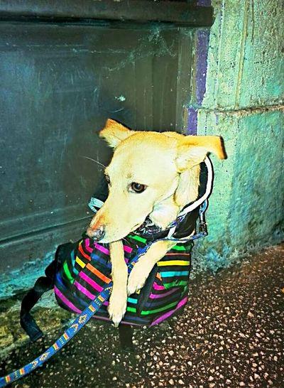 Génie, my dog