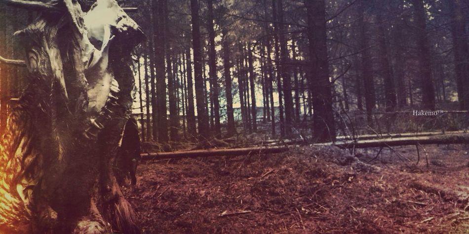 """Wild"" AMPt_community Nature_collection Filthyfeeds EyeEm Best Shots"