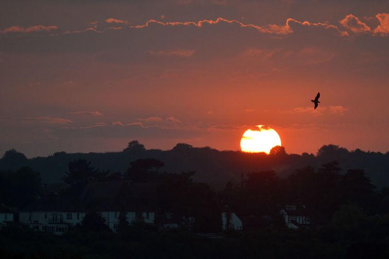 Silhouette of birds flying against sunset sky