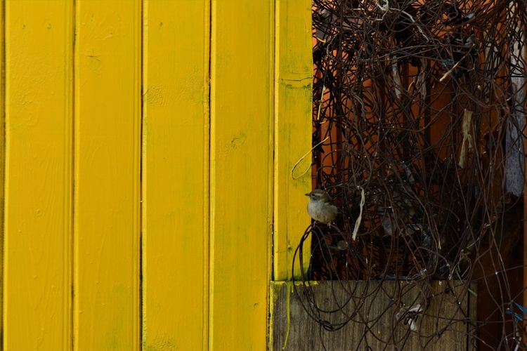 Close-up of cat on yellow wall