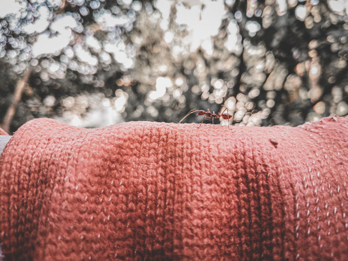 Close-up of hand against trees during winter