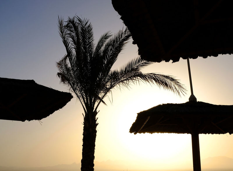 Beachlife Close-up Day Leisure Time Nature No People Outdoors Palm Tree Relaxation Silhouette Silhouettes Sky Soma Bay Sundowner Sunset Tranquil Scene Tree Umbrellas
