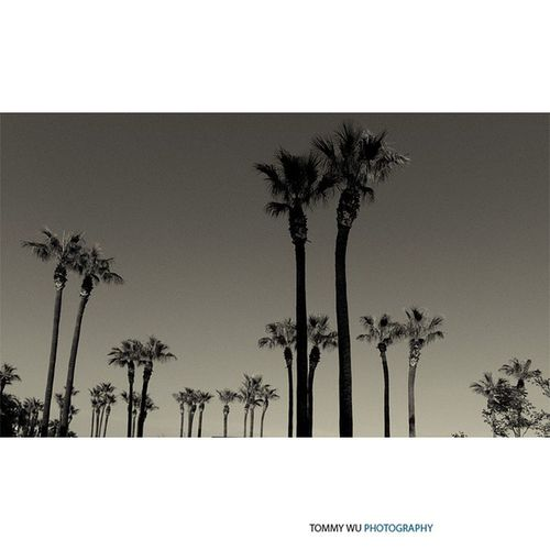 Third day of five B\W image challenge by my photographer friend Larry. Unionstation Palmtrees Bw Streetscene