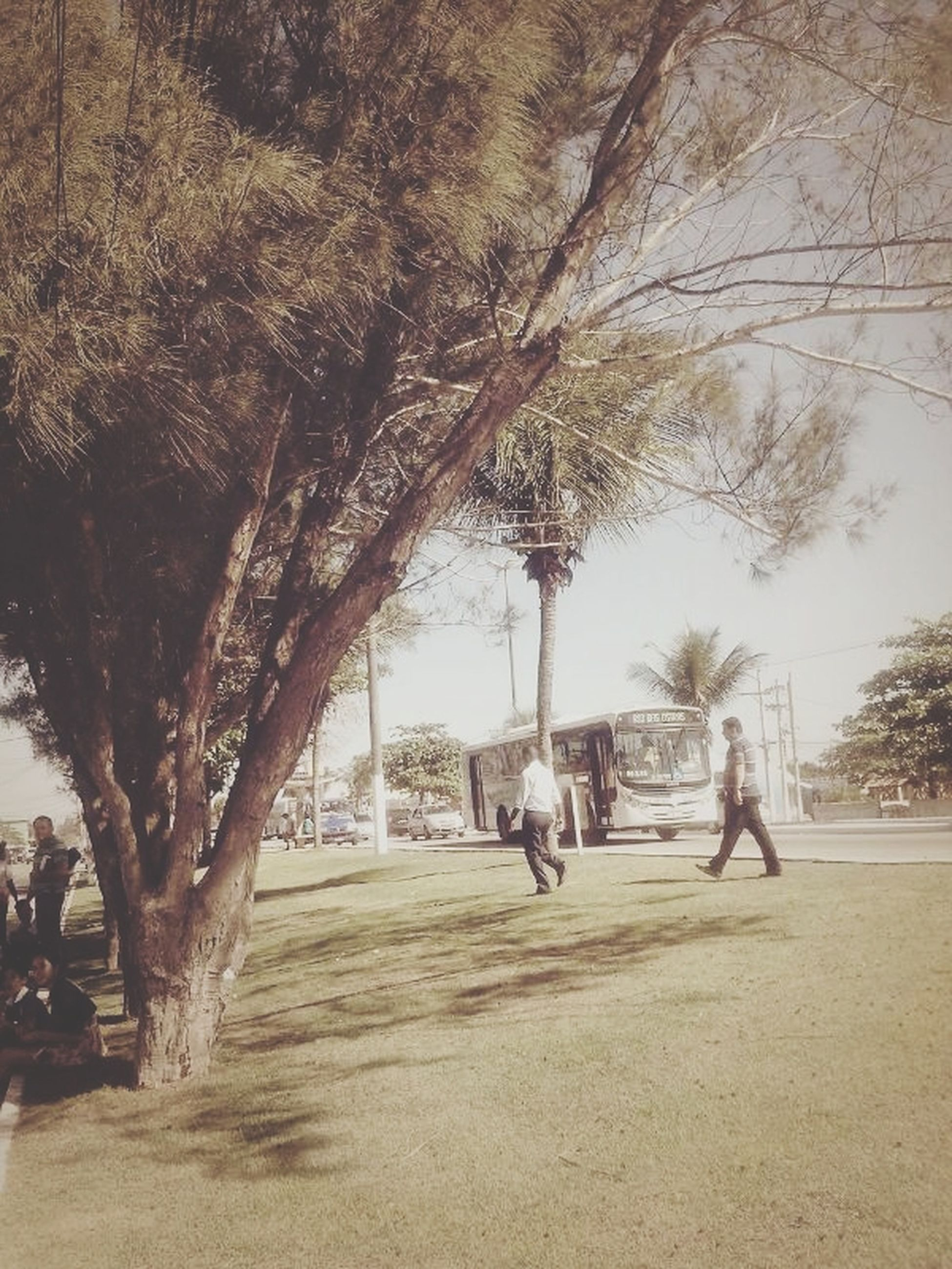 tree, lifestyles, men, tree trunk, leisure activity, person, park - man made space, growth, sunlight, branch, nature, walking, medium group of people, shadow, street, outdoors, day, footpath, large group of people