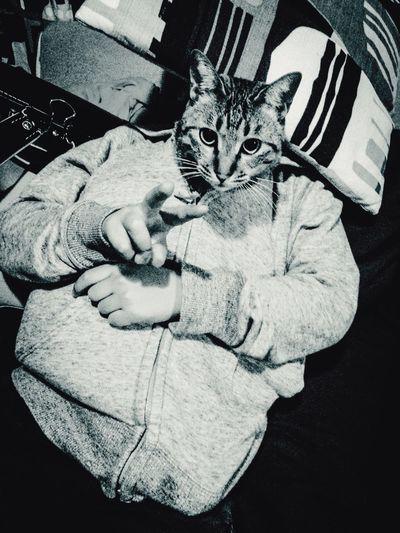 Joke Cat Son Peace How Do We Build The World? Cooperation Nininbaori