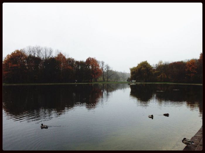 Nature Autumn Water Reflections Foggy