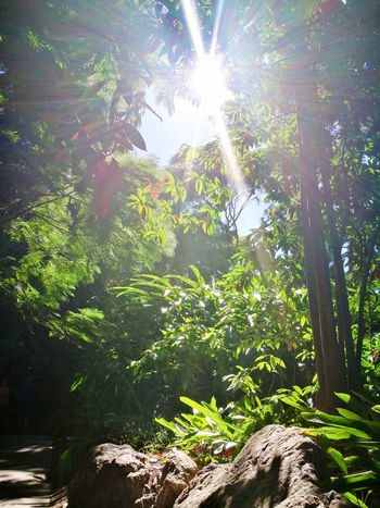 Beauty In Nature Day Growth Lens Flare Low Angle View Nature No People Outdoors Plant Solar Flare Sun Sunbeam Sunlight Tranquility Tree