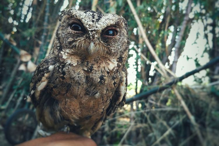 Owl Owl Photography Owl Art Close-up Animal Wildlife Animals In The Wild One Animal Nature Outdoors No People Portrait Animal Themes Tree EyeEm Selects Plant Landscape Beauty In Nature Animals In The Wild Nature Dramatic Sky Scenics Growth Focus On Foreground Full Length EyeEmNewHere