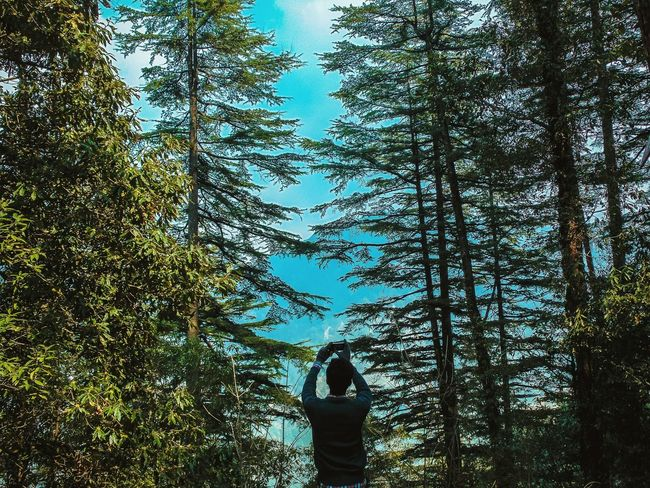 The great landscape of pine trees 😍 Forest Pine Taking Photos Picture People Landscape Mussoorie Tadaa Community Uttarakhand Tree Sky Landscape_Collection Nature Tourism Travel Dhanaulti India North India Tourist Attraction  From My Point Of View Perspective Big Trees Trees Hugging A Tree Viewpoint