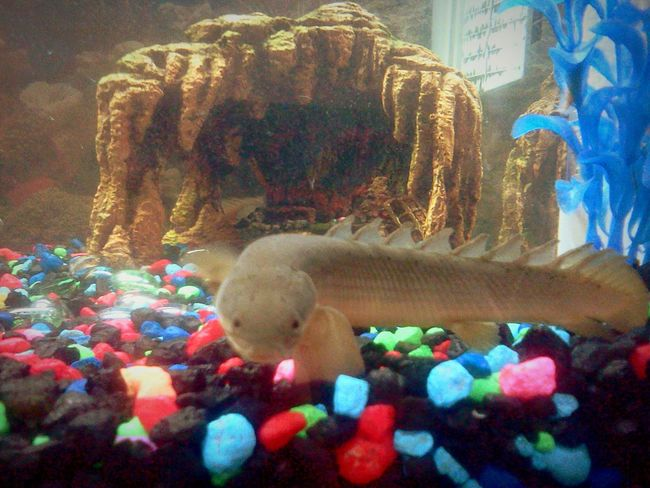 Pet Portrais no people Underwater Close-up Tranquil Scene The Week On EyeEm EyeEmNewHere Pet Portraits UnderSea Pets Domestic Animals Odd Fish UnderSea Animal Themes Aquarium Visual Creativity