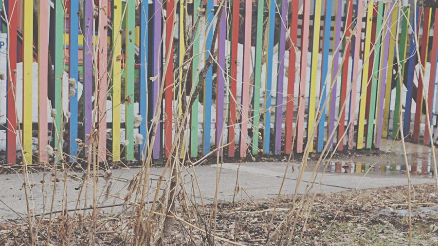 Pattern Pieces Fence Rainbow All Of The Colours Painted Fence Reflection Puddle Early Spring It's so gloomy but, this fence! 😍