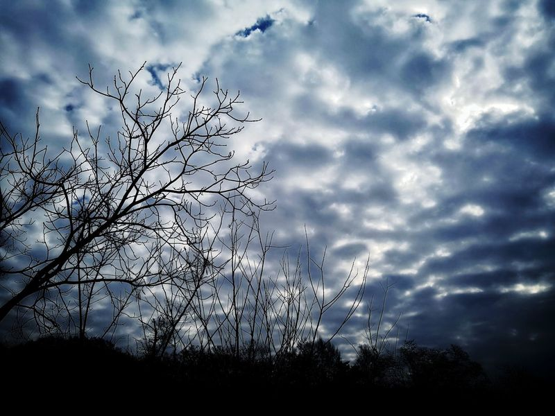 Cloud - Sky Sky Nature Silhouette Flying Bird Outdoors Low Angle View Beauty In Nature No People Day Large Group Of Animals Storm Cloud Animals In The Wild Animal Themes Close-up Freshness
