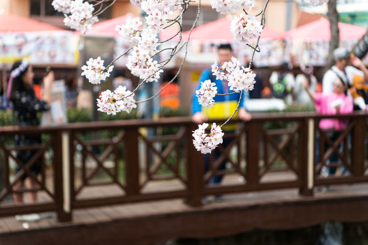 Beauty In Nature Celebration Close-up Day Decoration Flower Flower Arrangement Flower Head Flower Pot Flowering Plant Focus On Foreground Fragility Freshness Growth Incidental People Nature Outdoors Plant Selective Focus Table Vulnerability