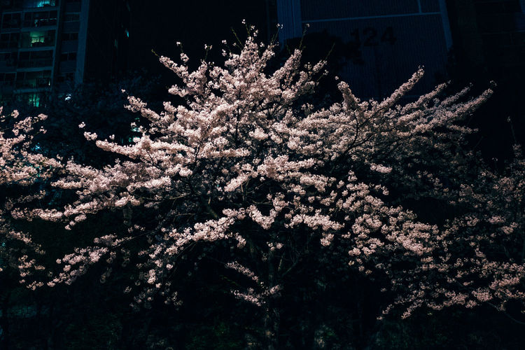 Close-up of flowers blooming on tree at night