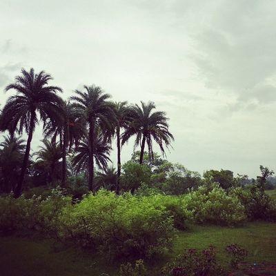 Village Nature Beauty