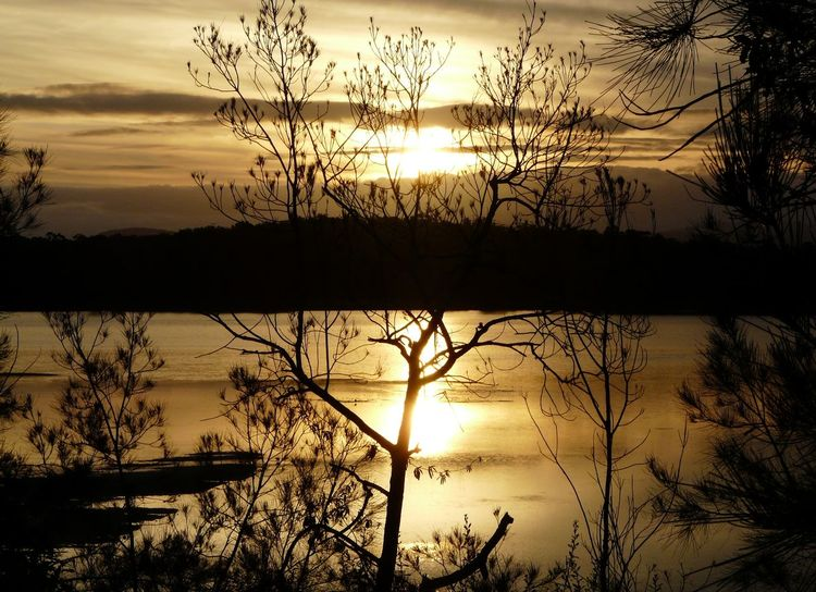 Australian Landscape Beauty In Nature Cloud And Sky Day Is Done Golden Golden Hour Lake Serenity Sunset Sunset Silhouettes Tranquil Scene Traveling Trees And Sky Tuross Lake Water Reflections