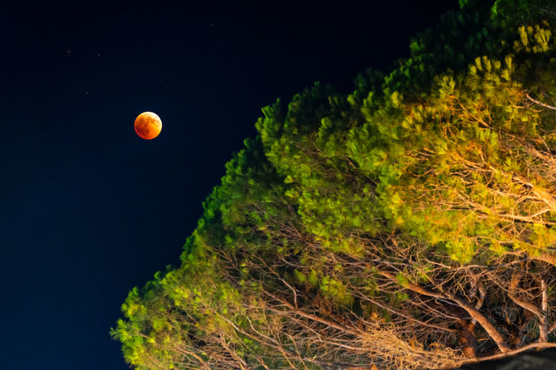 Red moon Eclipse Redmoon Colors Night Nightphotography Skyphotography Tree Moon Sky Grass