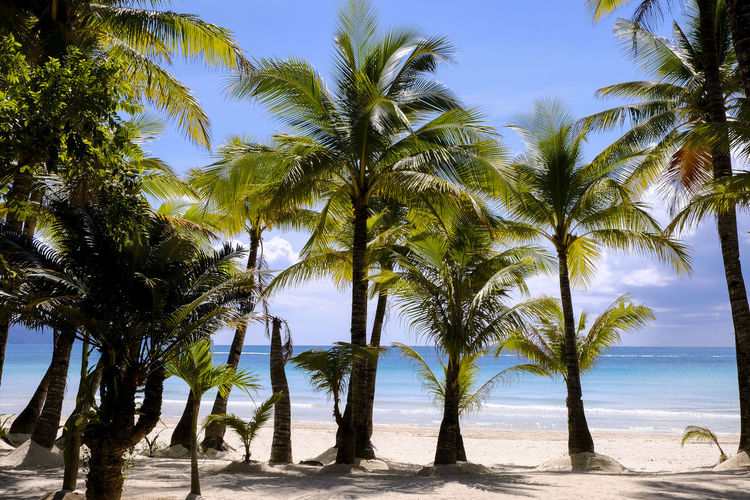 Tree Palm Tree Tropical Climate Plant Sky Beach Land Sea Water Beauty In Nature Nature Scenics - Nature Tranquility Tranquil Scene Growth Sand Horizon Over Water Tree Trunk Day No People Tropical Tree Outdoors Coconut Palm Tree Palm Leaf