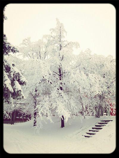 Trees Snow Wasserkuppe