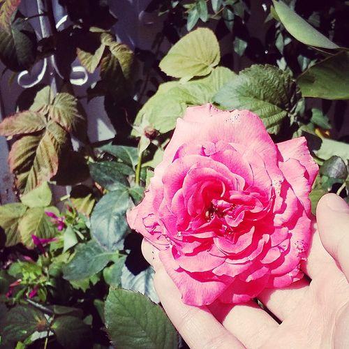 Aşk incinmesinden korkmaktır. Pink Flower