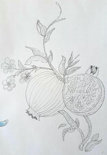 My art Ink Botanical Botanic Bothanical Draw Drawings Draws Flowers Flower Pomagranate Nature BLACKBOOk Naturelovers Justwhite White