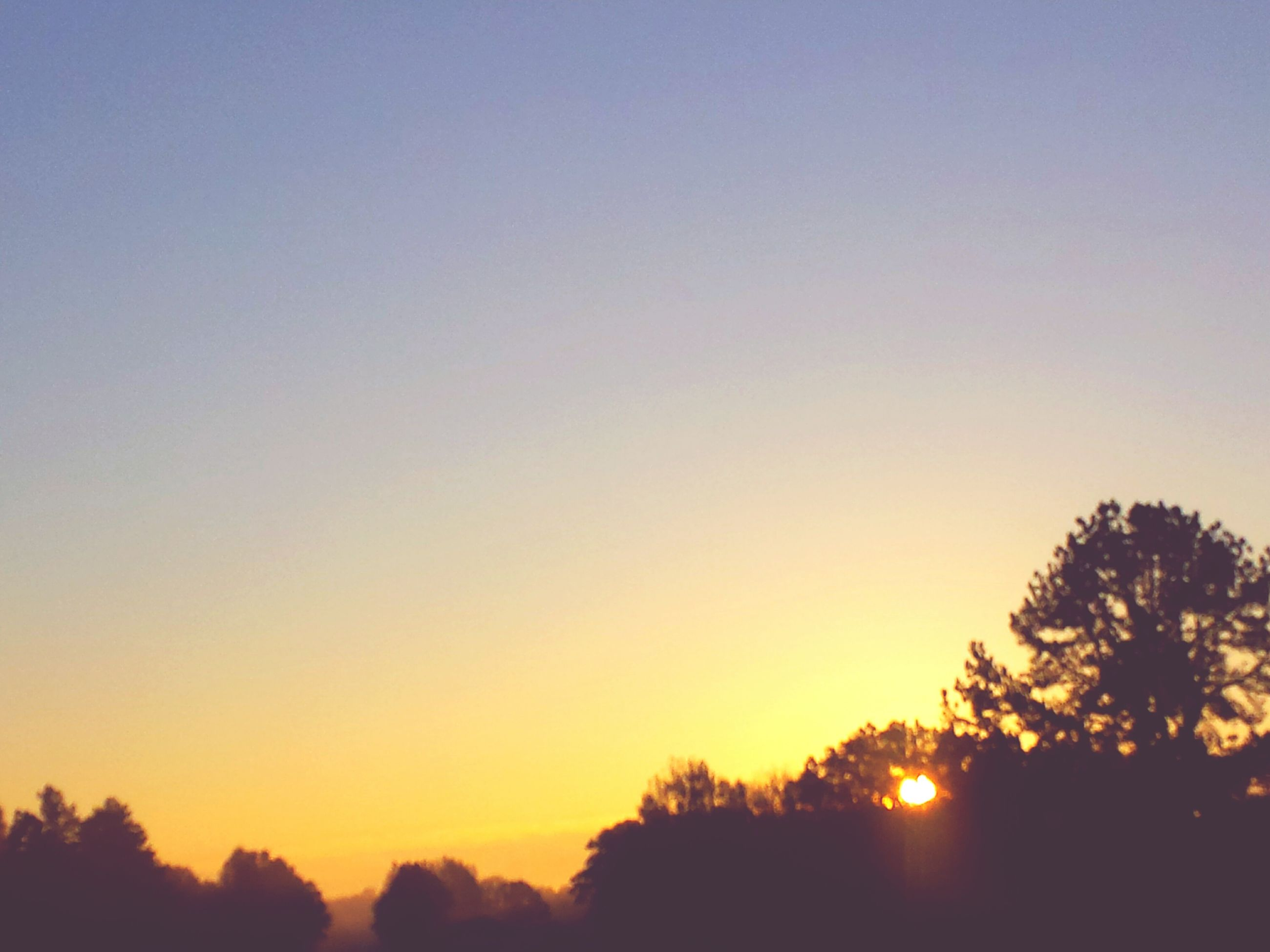 sunset, silhouette, tree, tranquil scene, clear sky, tranquility, scenics, beauty in nature, copy space, orange color, sun, nature, idyllic, landscape, growth, sunlight, sky, outdoors, no people, non-urban scene