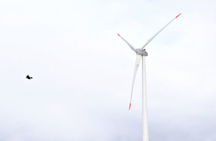 Alternative Energy Animal Themes Bird Day Environment Environmental Conservation Flying Fuel And Power Generation Low Angle View Nature No People Outdoors Renewable Energy Sky Wind Power Wind Turbine