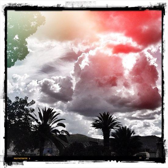 Palmeras Palms árbol Trashcans cielo sky nubes clouds byn compo igers instagramers ihub instamood instagood instahub picoftheday photooftheday fotodeldia bestpicoftheday gramermex mextagram iphoneonly iphonesia iphone4s igersmania mexico lalojm1 2012