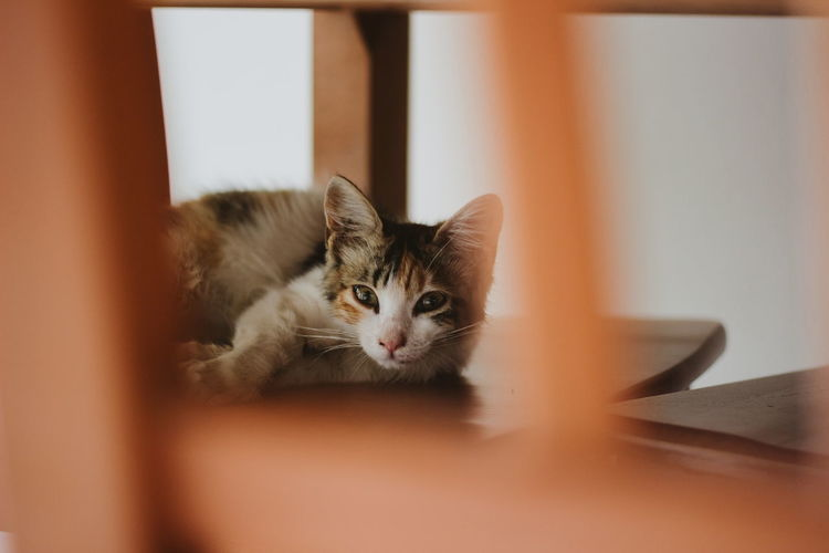 Portrait of cat lying on a chair