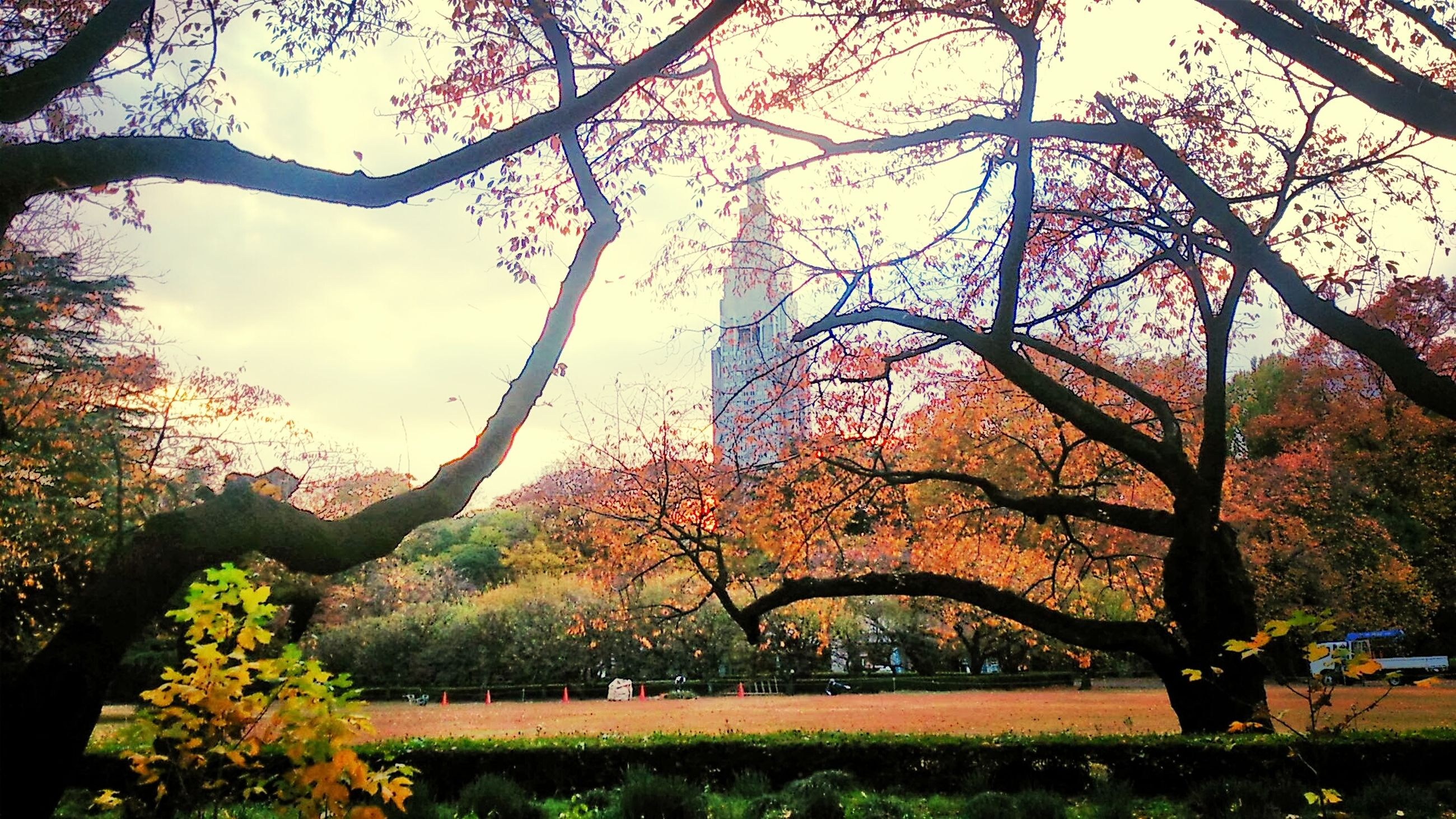 tree, branch, architecture, built structure, park - man made space, growth, sky, beauty in nature, nature, building exterior, flower, tranquility, park, grass, tranquil scene, tree trunk, bare tree, scenics, green color, travel destinations