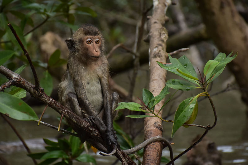 Animal Themes Animal Wildlife Animals In The Wild Close-up Day Focus On Foreground Mammal Monkey Nature One Animal Outdoors Plant Tree