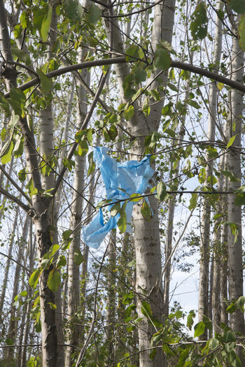 Amager Fælled Blue Color Colors Urban Nature Contrasts Forest Hanging Nature No People Plastic Pollution Sunny Day Tree