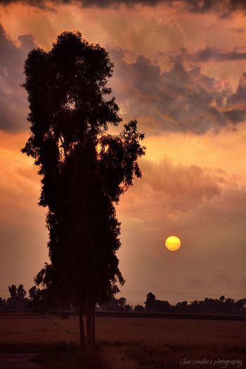 Gursandhuphotography Light And Shadow Cloud_collection  Sunset 43 Golden Moments Punjab India My Country In A Photo Nikon D7100 Eye4photography  Sweet Memories EyeEm Best Shots Popular Photos Tree And Sky