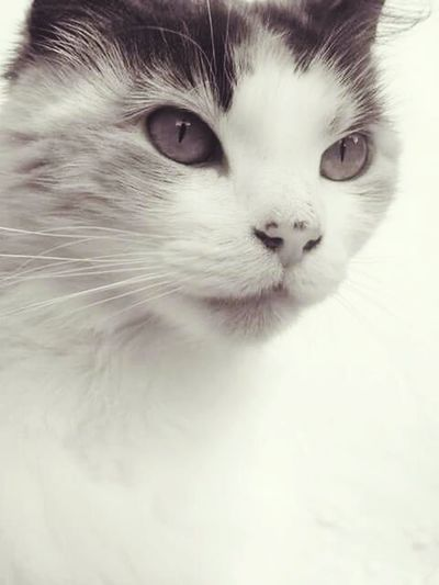 Lovely Cats Cats Of EyeEm Super Eyes Cat Eyes Macro Caracter Simple Beauty Black And White Pets Wildlife & Nature