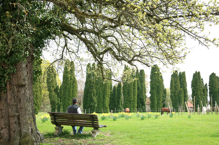 Bench Day Grass Growth Nature One Person Outdoors Park Park Bench Plant Real People Rear View Relaxation Seat Sitting Tree Tree Trunk Trunk