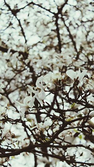 Flower power Flowers Trees Fleurs Fleur Flower Flowerporn Spring Showcase April