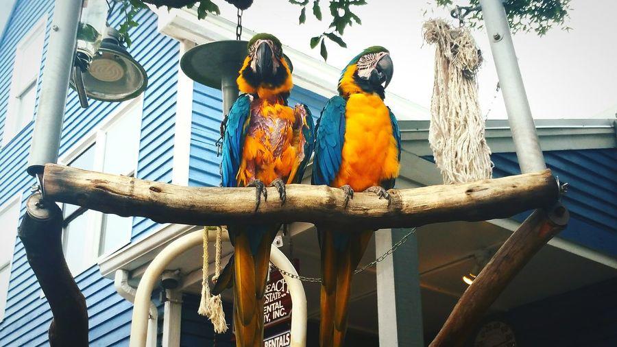 Travel South Carolina Bird Photography Hilton Head Island Seapines South Beach Marina Islandlife Parrots