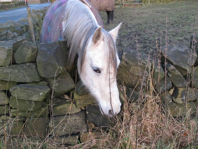 One Animal Domestic Animals Livestock Mammal Animal Themes Horse Outdoors Day No People Nature Landscape Field Tranquil Scene Cold Temperature Valleyside Winter Scenics Tranquil Scene Outdoors Eyeemphotography EyeEmbestshots. Horses_of_instagram Fine Art Photograhy Dusk Moorland Grass