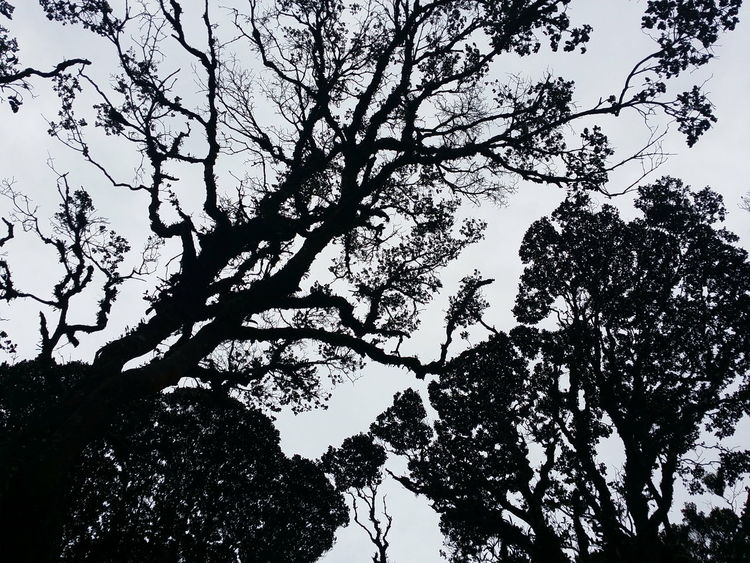 Tree Low Angle View Silhouette Branch Nature Beauty In Nature Sky Freshness Mountain Forest Beauty In Nature Tourism Tree Phone Photography Malaysiaphotography EyeEmNewHere The Week On EyeEm