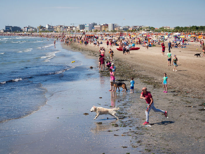 Water Crowd Group Of People Land Mammal Large Group Of People Real People Domestic Animals One Animal Domestic Beach Pets Leisure Activity Day Men Lifestyles Canine Outdoors