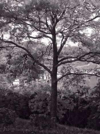 Blackandwhite Landscape_Collection Tree Nature Branch Outdoors No People Tranquility Beauty In Nature Growth Day Sky Ocean View Sea View Saikai City Japan