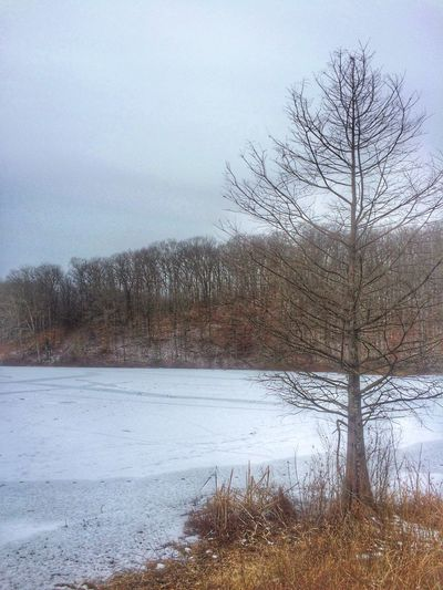 Yellow wood state forest Yellow wood lake Yellow Wood State Forest Beauty In Nature Bare Tree Nature Tranquility Tree Tranquil Scene Landscape Snow Day Lake Branch Cold Temperature No People Scenics Water Outdoors Sky Winter