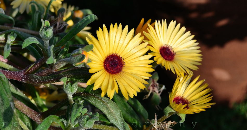 Flowers,Plants & Garden EyeEm Flower Plants EyeEm Best Shots - Flowers
