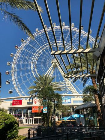 Point of view Orlando Orlando Florida Text Architecture Built Structure Building Exterior Tree Clear Sky EyeEmNewHere Day Low Angle View Amusement Park Blue Amusement Park Ride Outdoors No People Sky City Ferris Wheel